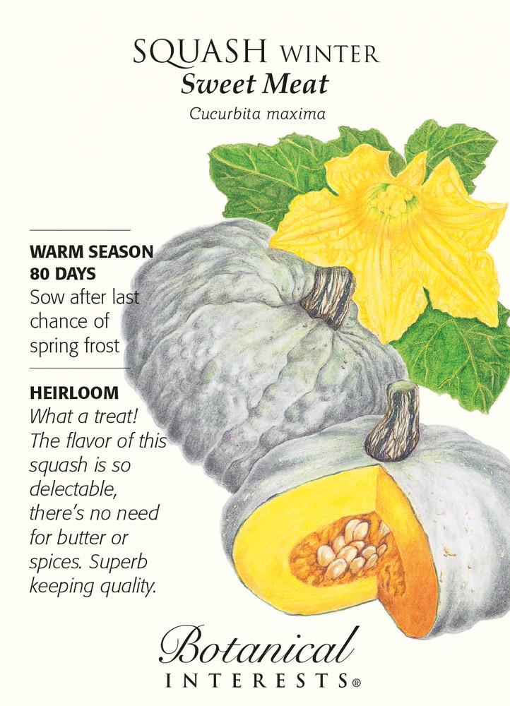 Sweet Meat Winter Squash Seeds - 3 grams - Heirloom