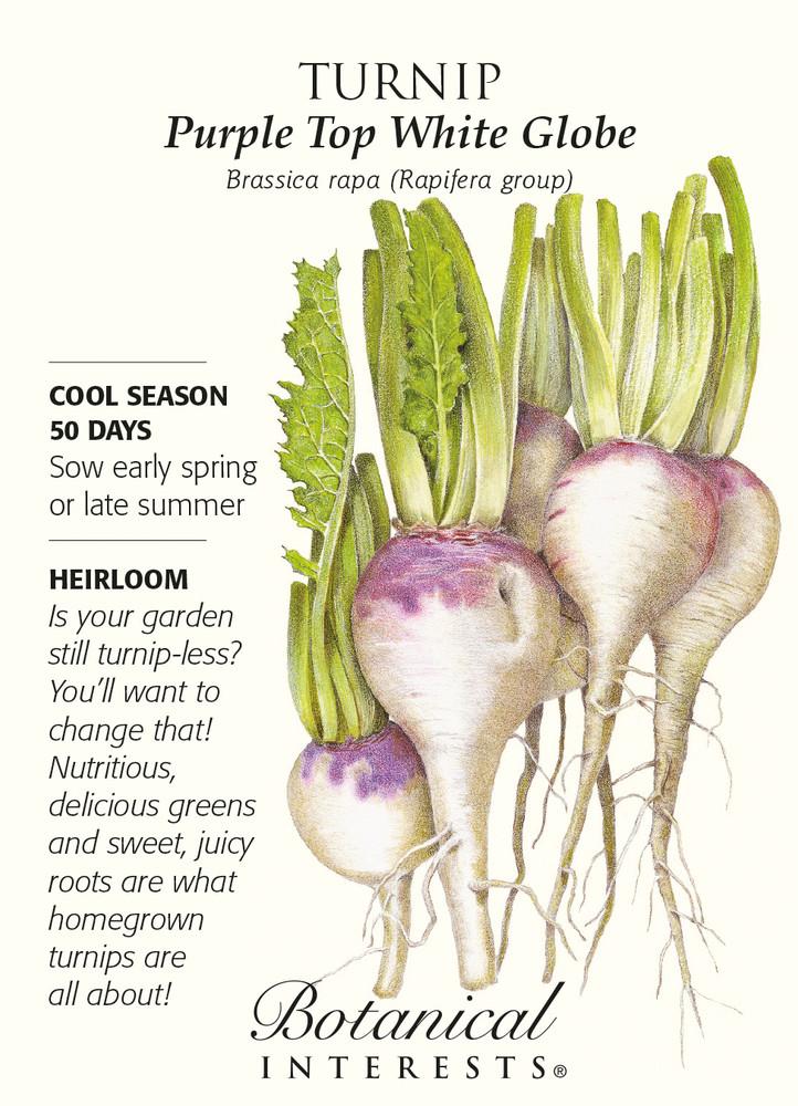Purple Top White Globe Turnip Seeds - 8 grams