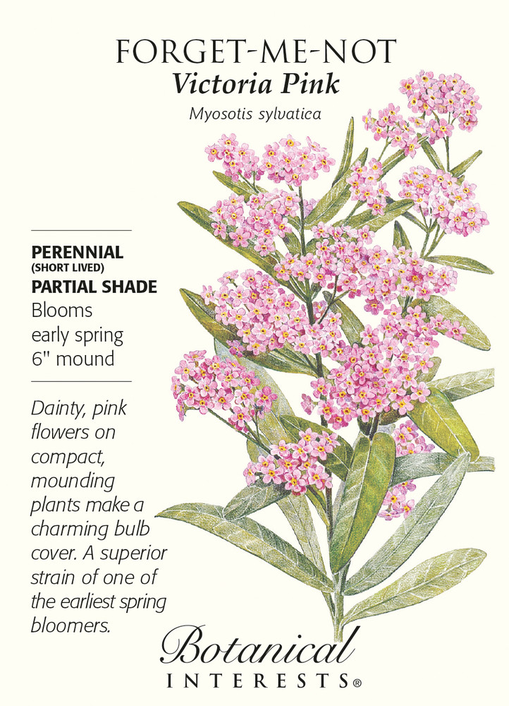 Victoria Pink Forget-Me-Not Seeds - .25 grams