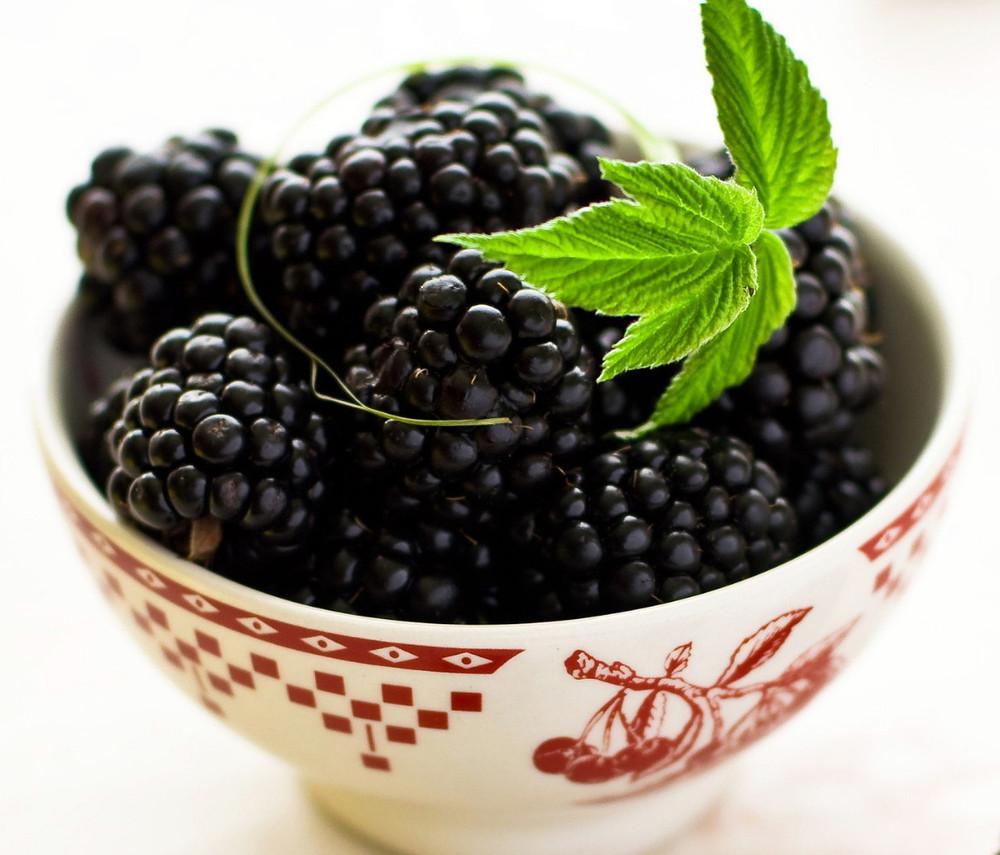 "Navajo Thornless Blackberry Plant - 2.5"" Pot"