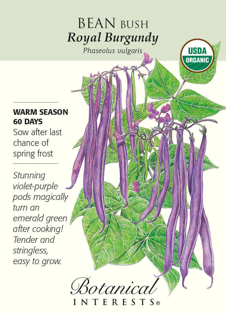 Royal Burgundy Bush Bean Seeds - 15 grams - Organic