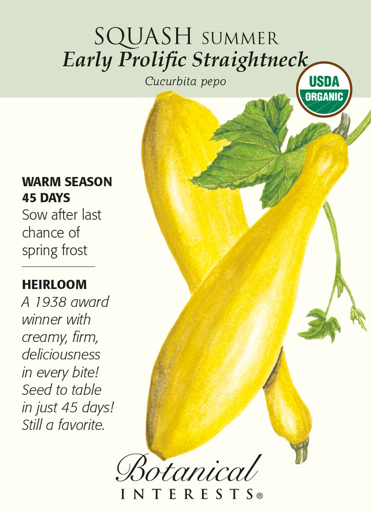 Early Prolific Straightneck Squash Seeds - 2 g - Organic