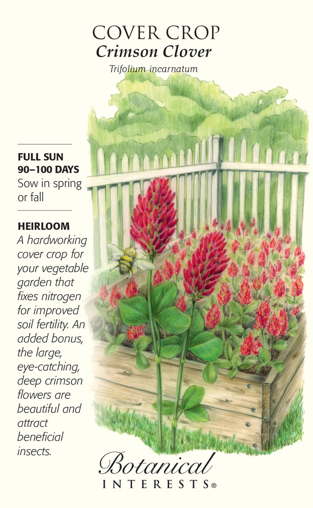 Crimson Clover Cover Crop Seeds - 40 grams