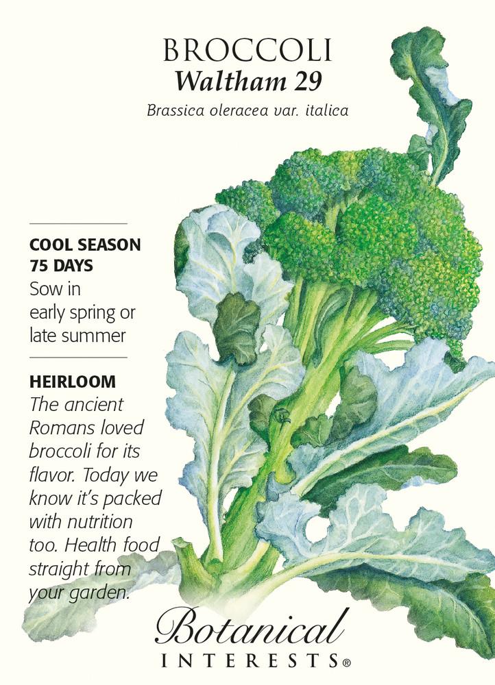 Waltham 29 Broccoli Seeds - 2 grams