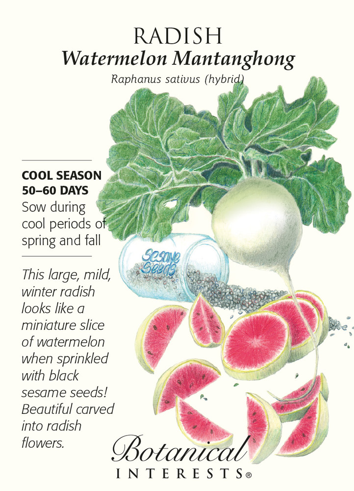 Watermelon Mantanghong Radish Seeds - 1 gram