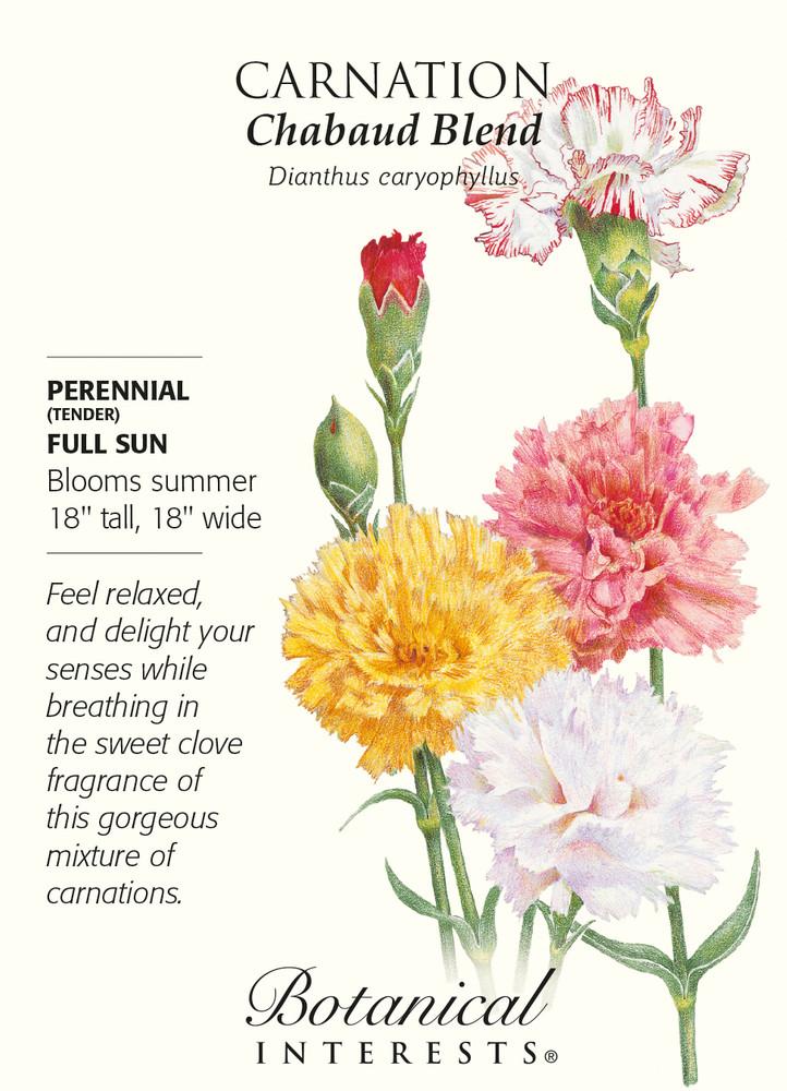 Chabaud Carnation Seeds - 350 mg - Perennial