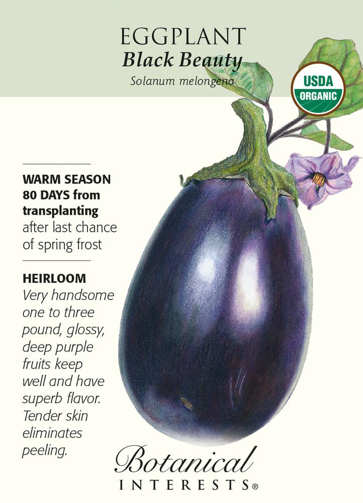 Black Beauty Eggplant Seeds-500 mg-Certified Organic