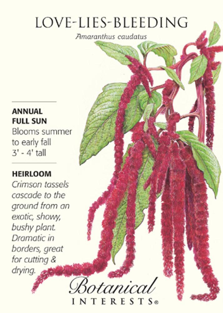 Love Lies Bleeding Seeds - 300 mg - Amaranthus