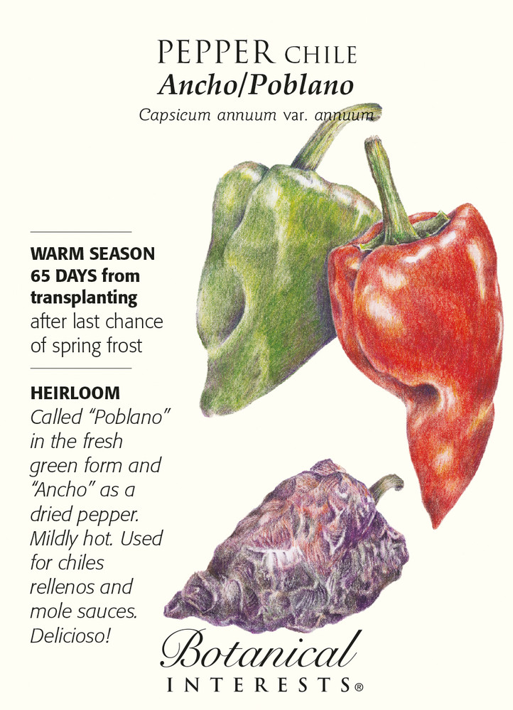 Ancho/Poblano Chile Pepper - 30 Seeds - Heirloom