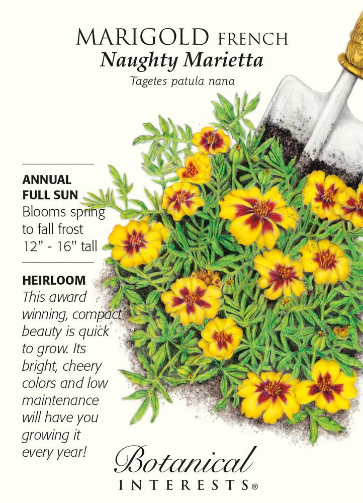 Naughty Marietta French Marigold Seeds - 500 mg - Botanical Interests