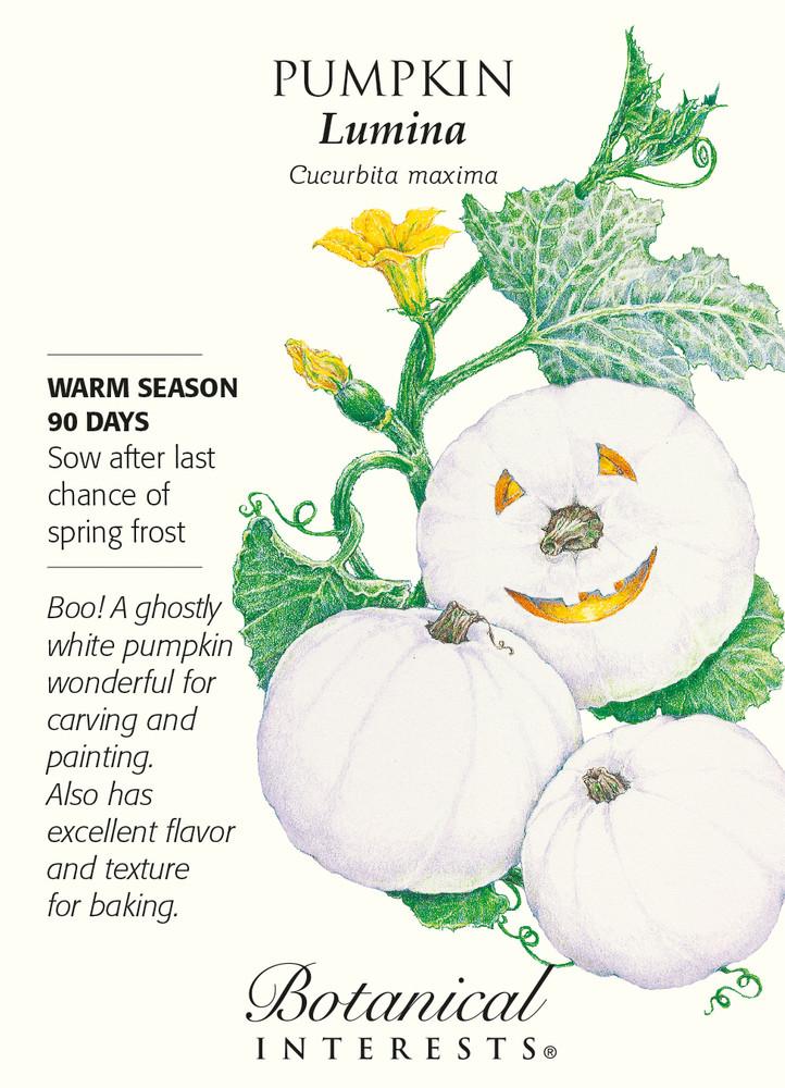 Lumina White Pumpkin Seeds - 3 grams