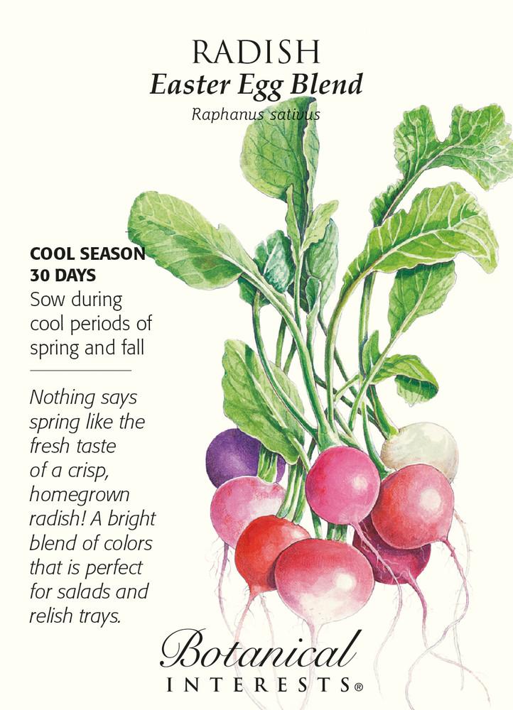 Easter Egg Blend Radish Seeds - 4 grams