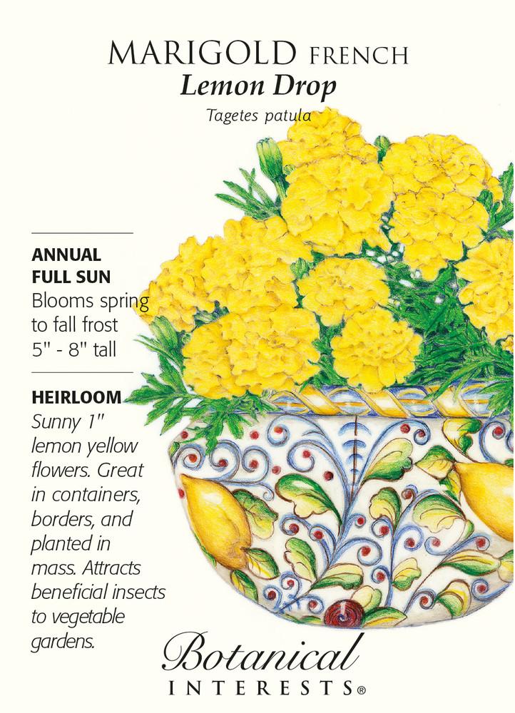 Lemon Drop French Marigold Seeds - 1 gram - Botanical Interests