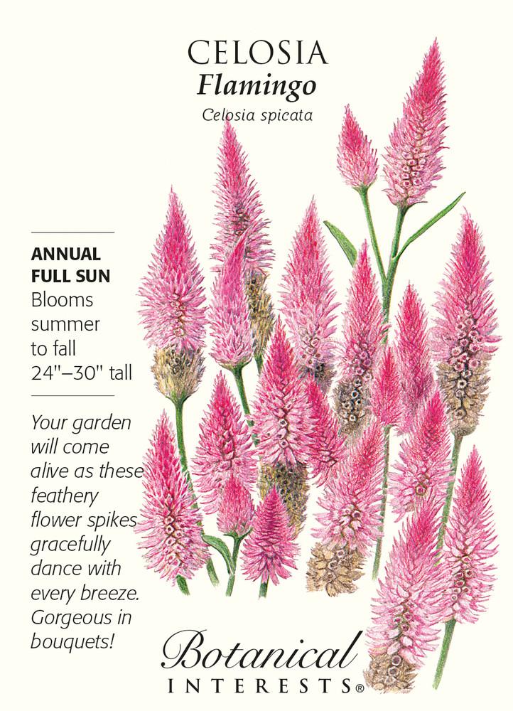 Flamingo Celosia Seeds - 500 mg - Annual