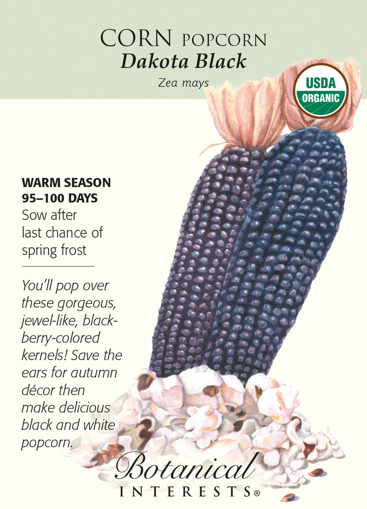 Organic Dakota Black Popcorn Corn Seeds - 8 grams