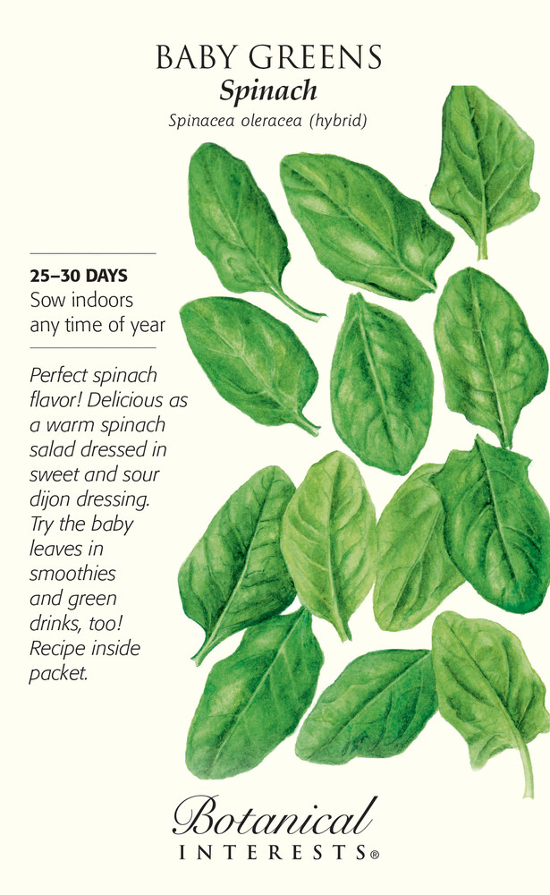 Spinach Baby Greens Seeds - 10 grams