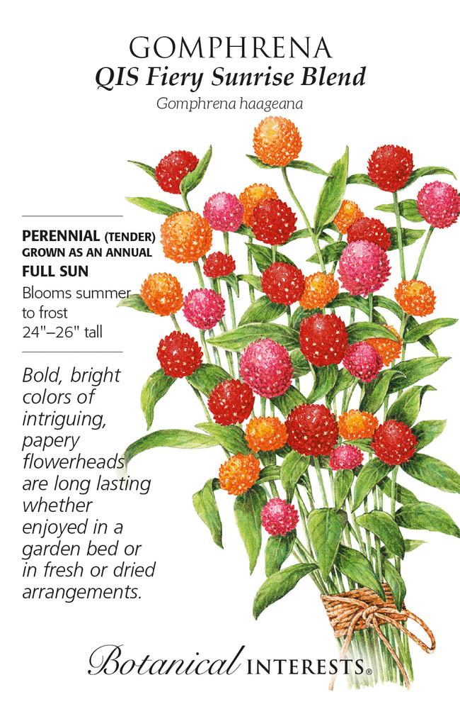 QIS Fiery Sunrise Blend Gomphrena Seeds - 150 mg