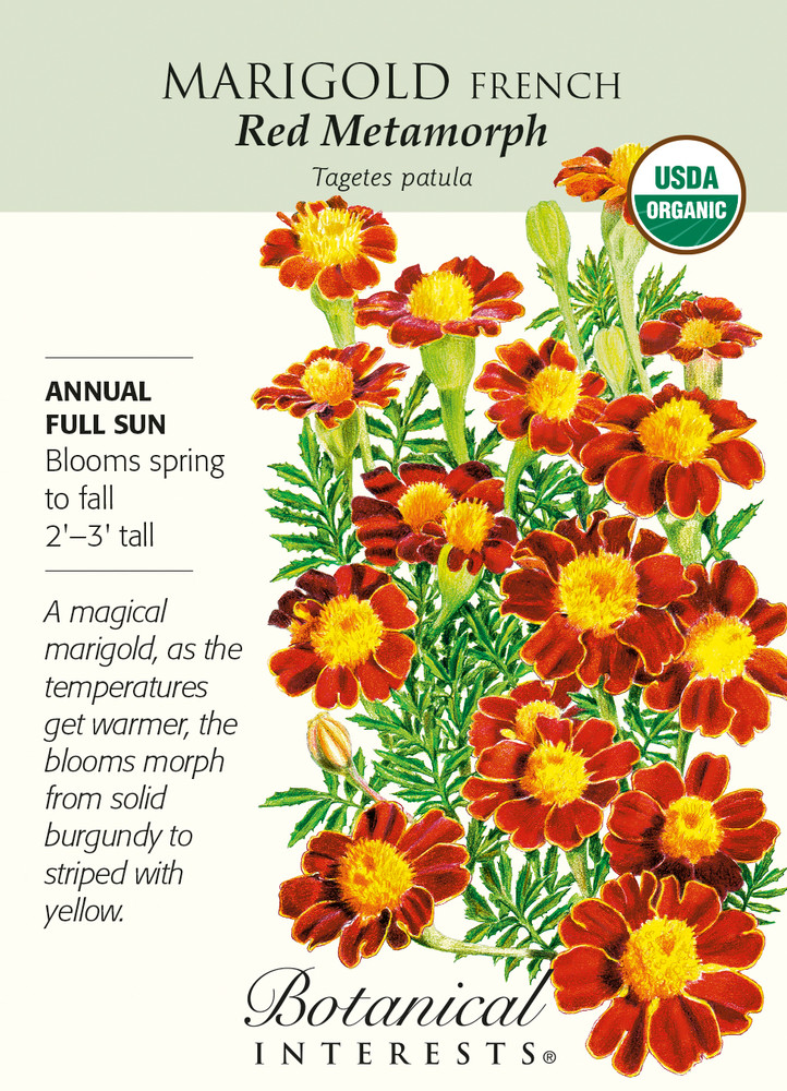 Organic Red Metamorph French Marigold Seeds - 150 Milligrams