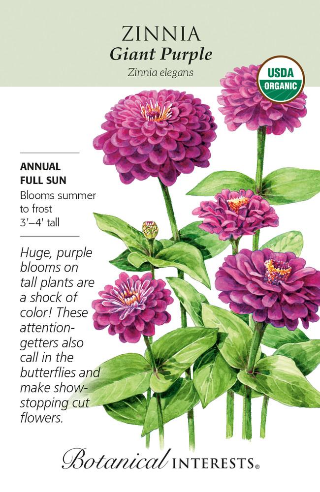 Organic Giant Purple Zinnia Seeds - 500 Mg
