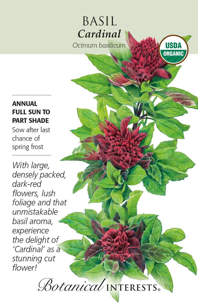 Organic Cardinal Basil Seeds - 80 Mg
