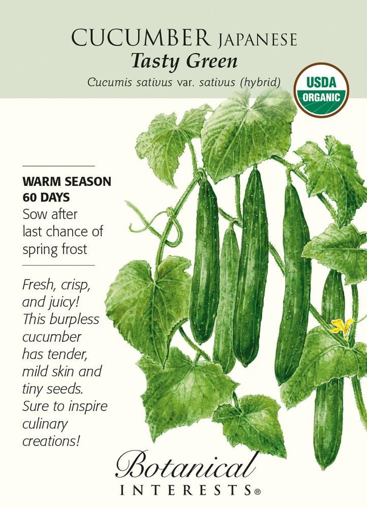 Organic Tasty Green Japanese Cucumber - 12 Seeds