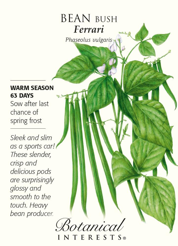 Ferrari Bush Bean Seeds - 15 grams