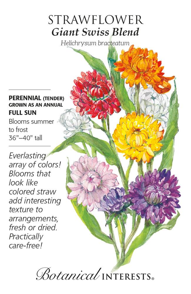 Giant Swiss Blend Strawflower Seeds - 100 Milligrams