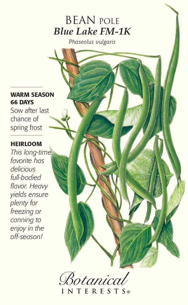 Blue Lake FM-1K Pole Bean Seeds - 60 grams