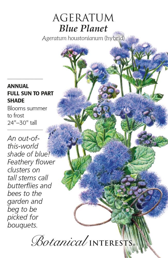 Blue Planet Ageratum Seeds - 30 Seeds