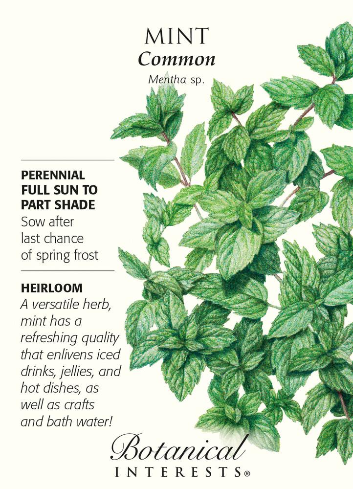 Common Mint Heirloom Seeds - 25 Milligrams