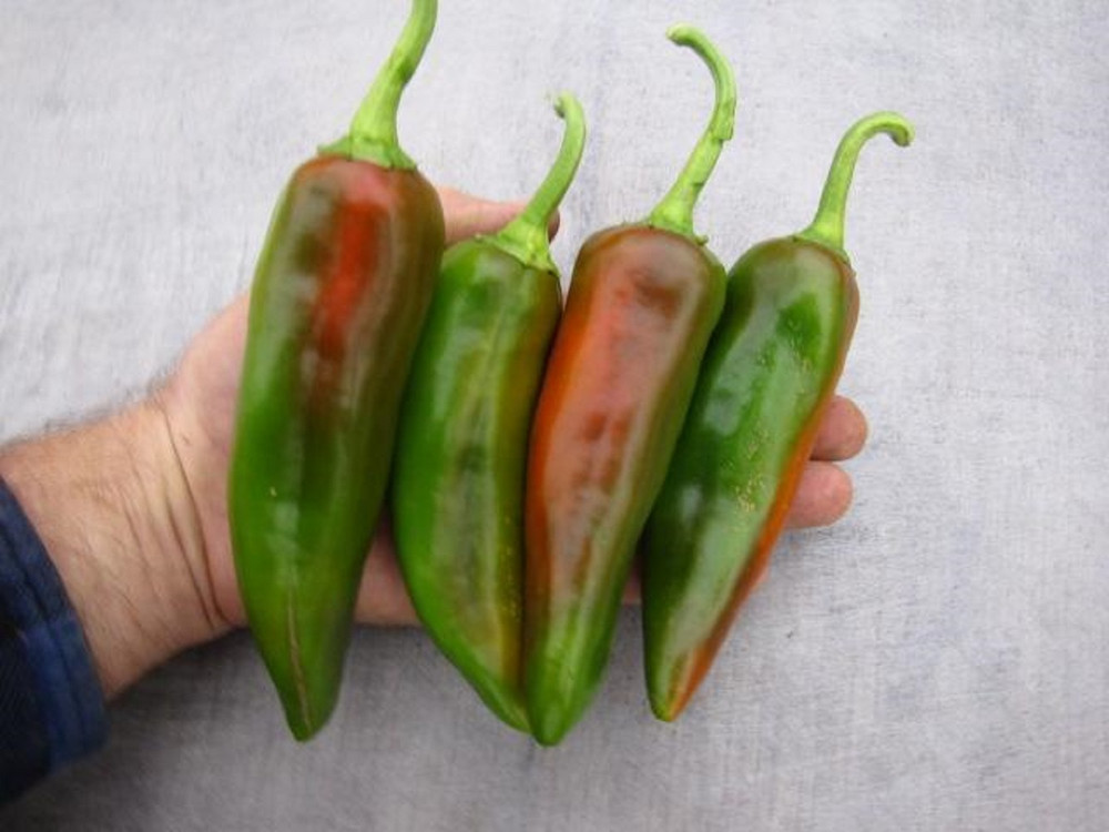 Biggie Chili Pepper Seeds - 10 Seeds
