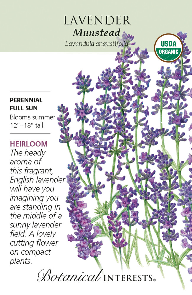 Organic Munstead Lavender - 40 Mg