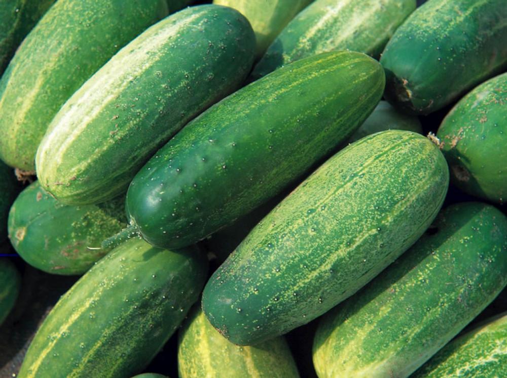 National Pickling Cucumber - 50 Seeds