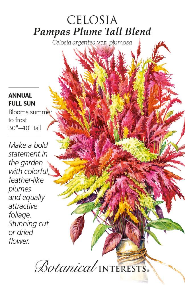 Pampas Plume Tall Blend Celosia Seeds - 50 mg