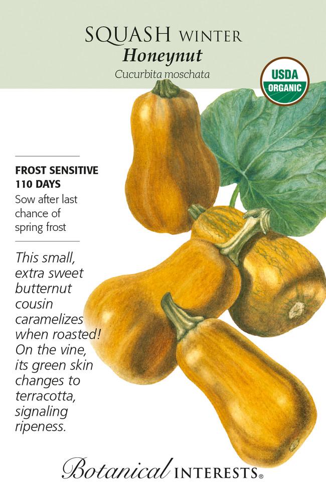 Organic Honeynut Winter Squash Seeds - 10 Seeds
