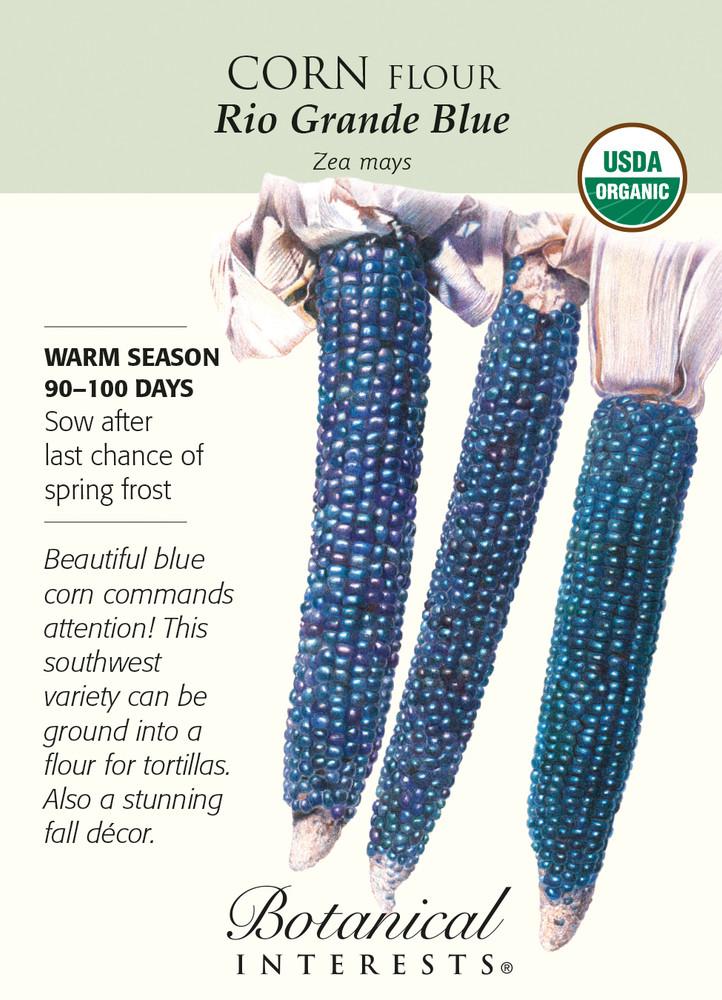 Organic Rio Grande Blue Corn Seeds - 8 grams