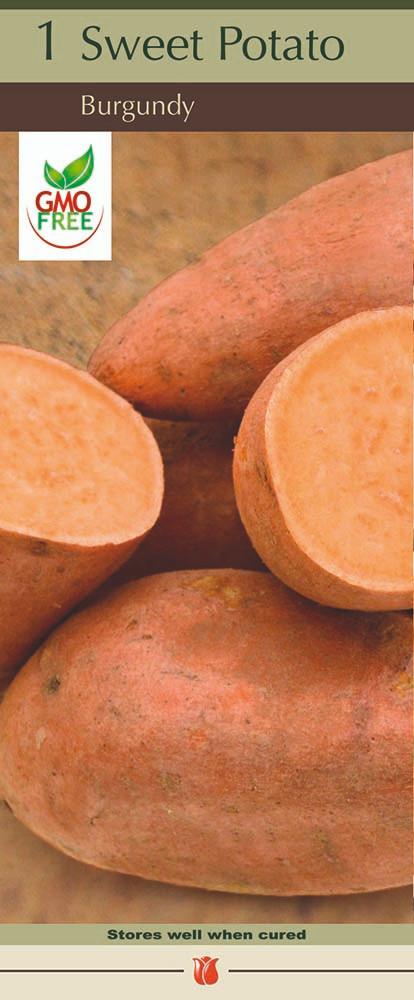 Burgundy Sweet Potato - 1 Tuber - #1 Seed Tuber