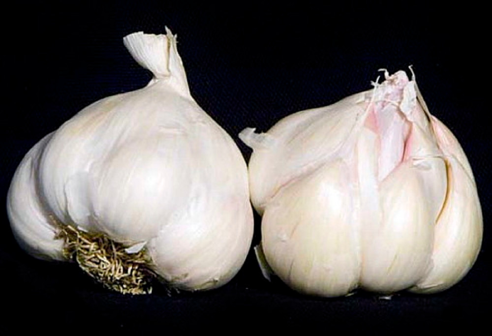 Italian Late Garlic Bulbs - 3 Bulbs