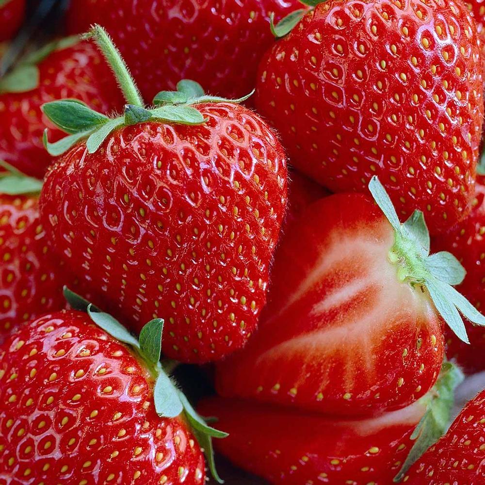 Jewel Strawberry 10 Bare Root Plants - June-Bearing