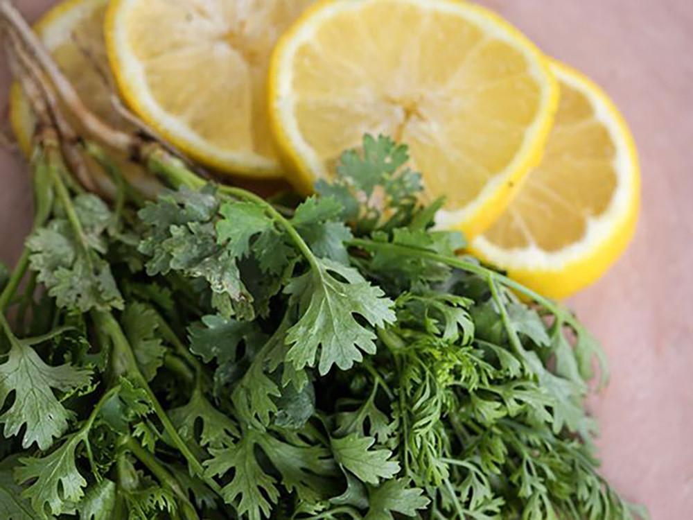 """Zest Lemon Twist Cilantro - Coriander - Live Herb - 3"""" Pot"""