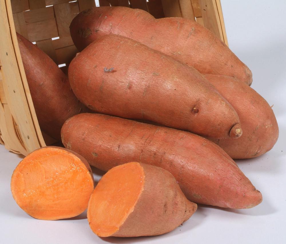 Hernandez Sweet Potato Slips - Ipomoea batatas - 2 Slips