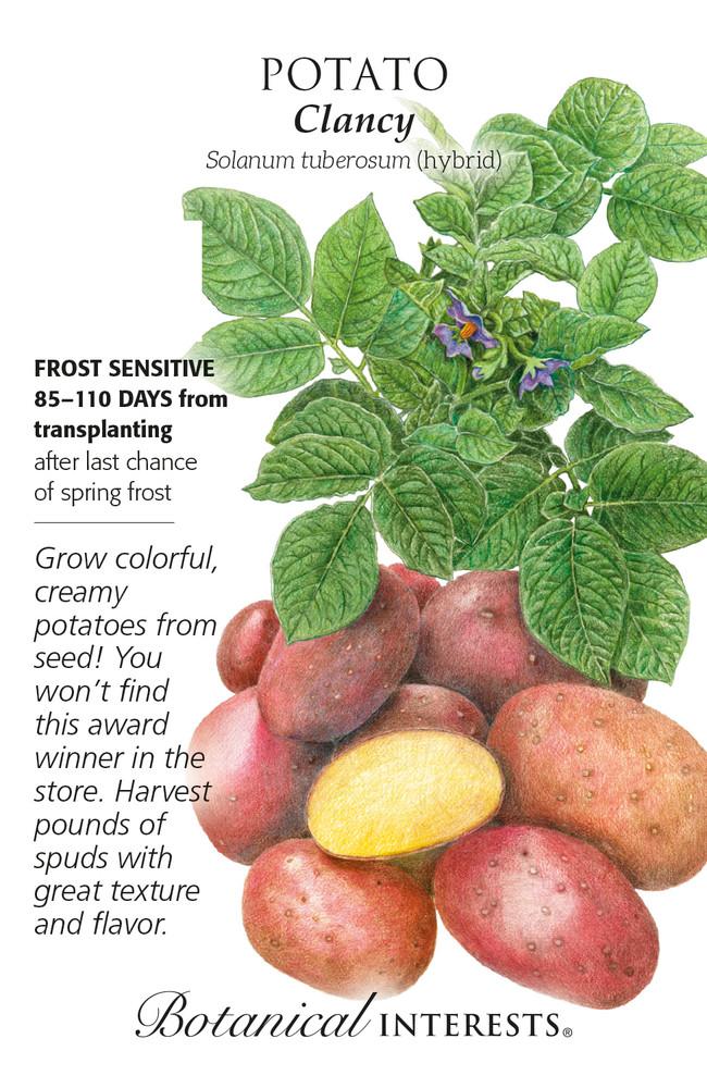 Clancy Potato Seeds - 12 Seeds - Botanical Interests