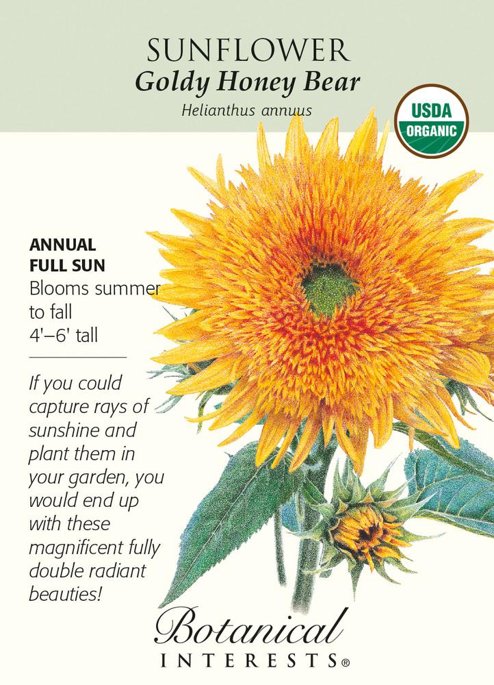 Goldy Honey Bear Sunflower - 25 Seeds - Organic