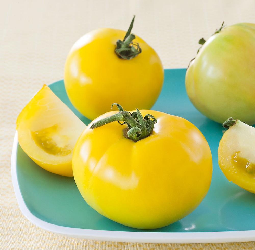 "Lemon Boy Tomato Plant - Yellow Slicing - 4"" Pot - Naturally Grown - No GMO's"