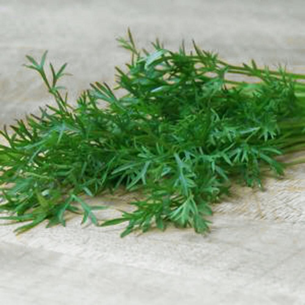 Delfino Cilantro Herb - 100 Seeds - Coriander