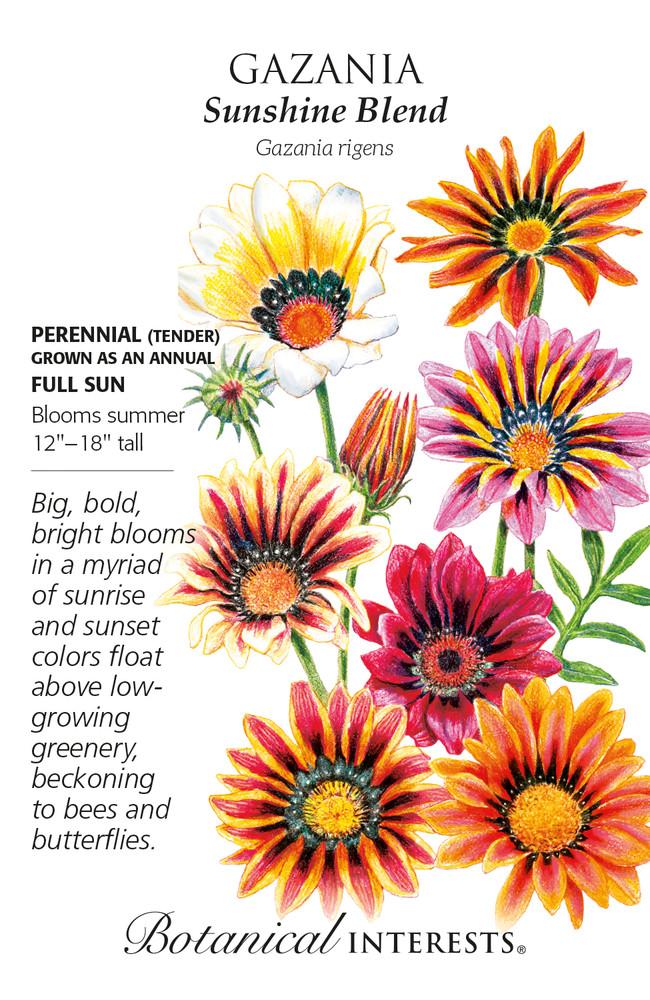 Sunshine Blend Gazania Seeds - 250 Mg