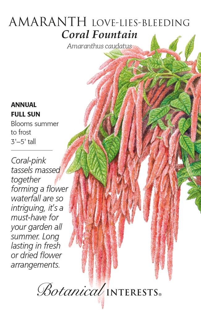 Coral Fountain Love-Lies-Bleeding Amaranth Seeds - 200 Mg