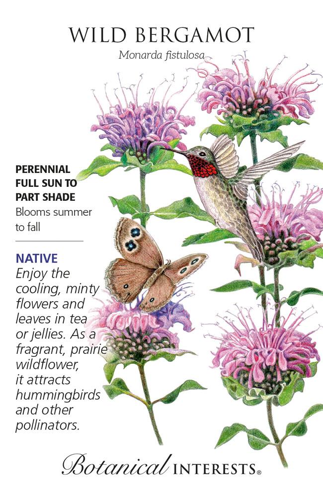 Wild Bergamot Seeds - Heirloom, Native - 100 Mg