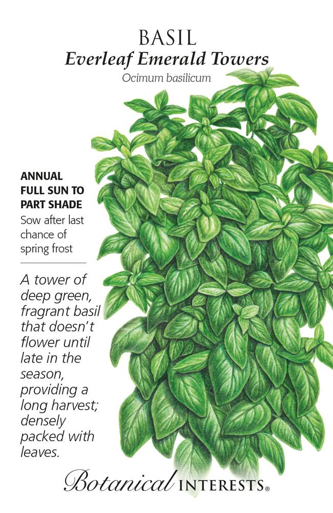 Everleaf Emerald Towers Basil Seeds - 25 Seeds