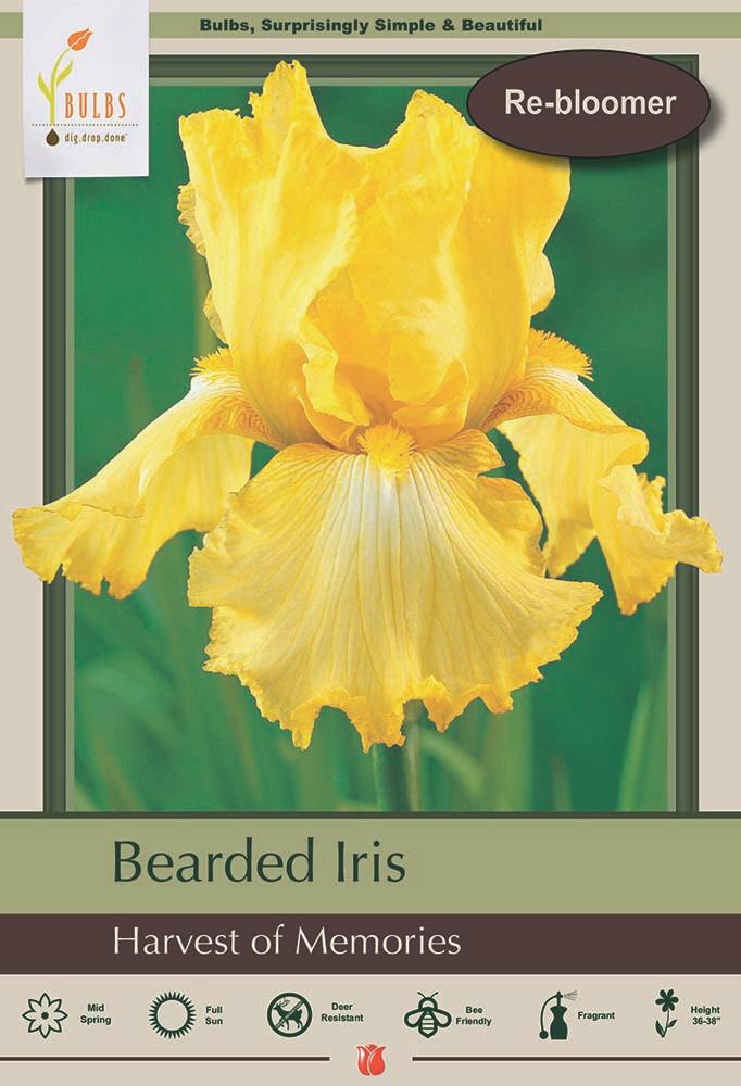 Harvest of Memories Bearded Iris - One Top Size Rhizome - Rebloomer